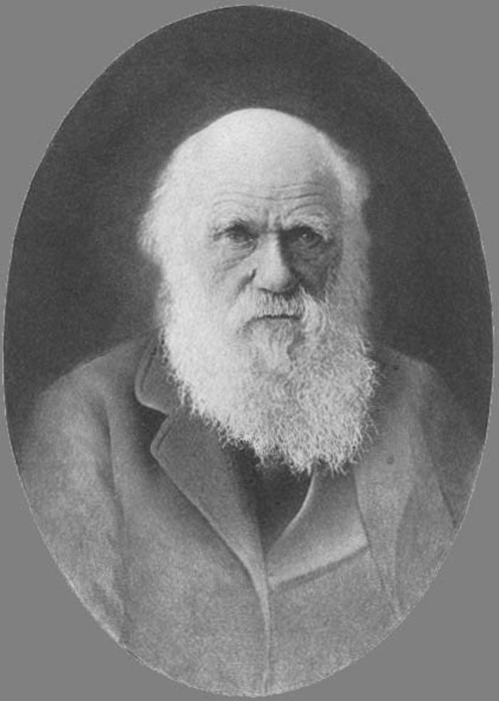 essays and reviews darwin